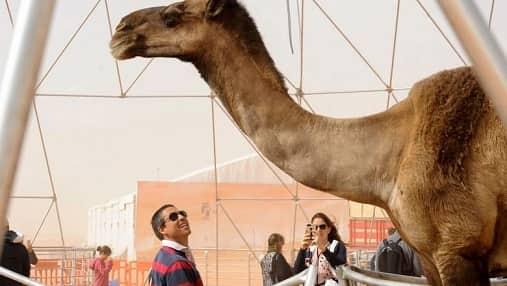 WORLDS TALLEST CAMEL IN SAUDI ARABIA CAMEL FESTIVAL