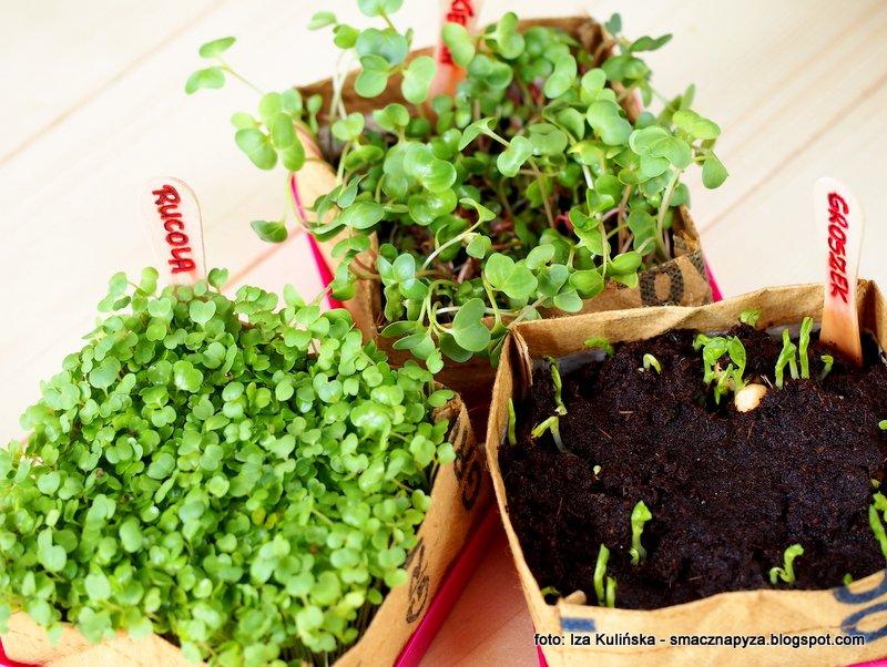 mikrowarzywa, home kitchen garden, kielki, ogrodek, ogrodniczka, jak uprawiac kielki w domu