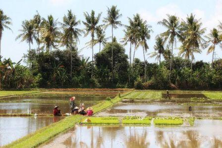 Singaraja North Bali Countryside Full-Day Tour Schedule - Mengwi, Bedugul, Ulundanu, Beratan lake, Candikuning, Village, Lovina, Beach, Gitgit, Waterfall, Buleleng, Bali, Tour, Excursion, Program, Trip, Itinerary, Plan, Schedule, Mountain, Leisure, Sightseeing, Holidays, Vacation