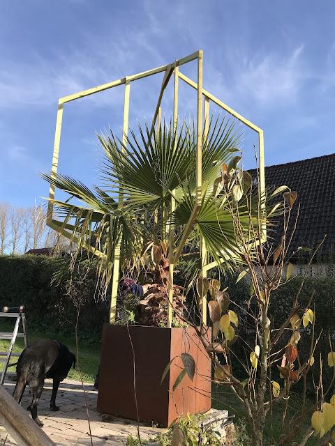 Winterschutz für Palme