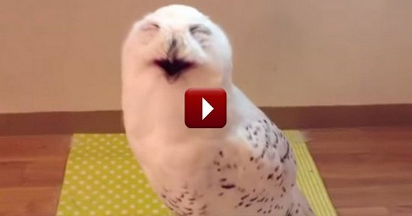 This is the most hilarious owl you've ever seen in your life!