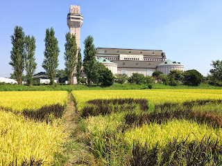 こしがや田んぼアート2014南越谷阿波踊り(9/22の様子)