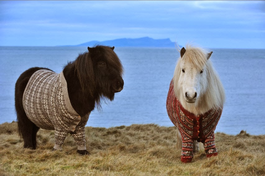 Funny animals of the week - 14 February 2014 (40 pics), two ponies wear sweater