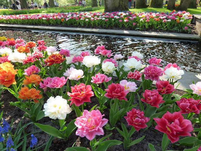 Visit Guide Keukenhof Tulip Gardens Amsterdam