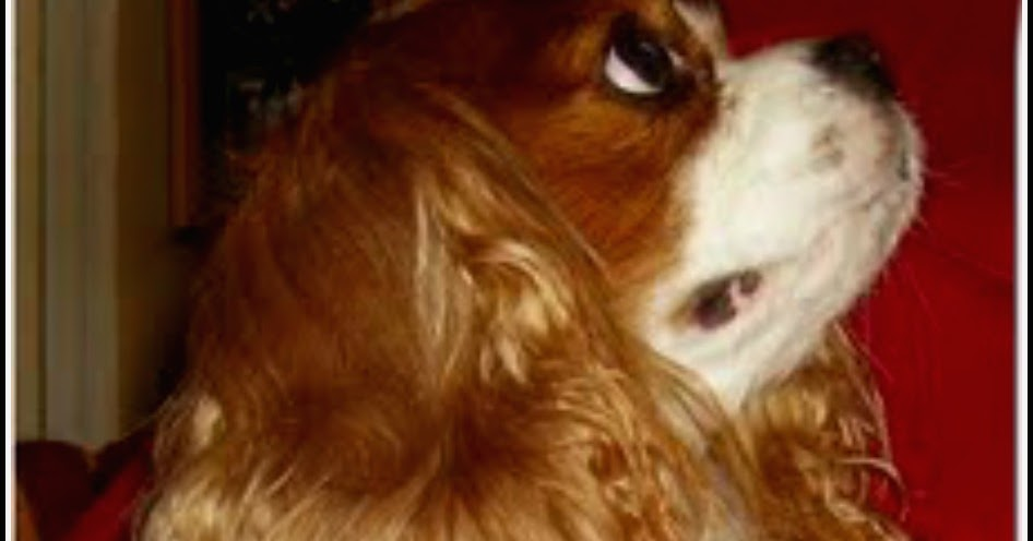 Dog Breeds Vets Worry About