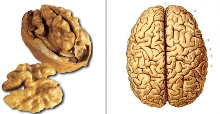 Foods Look Like Organs Heal