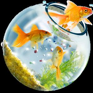 fish tank wallpaper hd for desktop full screen