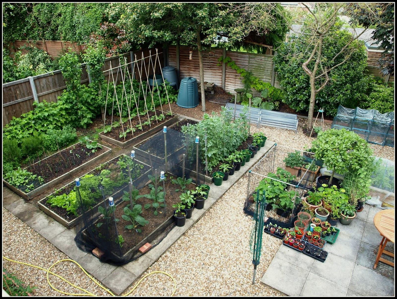 Mark's Veg Plot: My garden plan