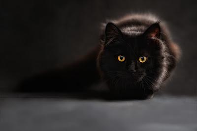猫_神話3