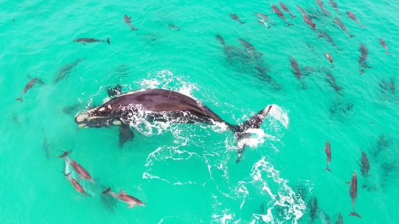Baleia e golfinhos a nadar