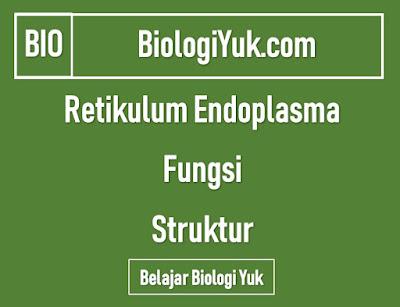 Retikulum Endoplasma (RE): Fungsi dan Struktur (Lengkap)