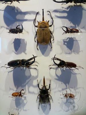 Canada-Quebec-Montreal-insectarium-coleopteres