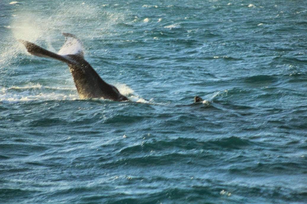 whales brazil bahia abrolhos