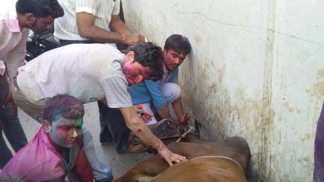 Uncontrolled-bike-collided-with-cow-jhabua-rajwada-अनियंत्रित बाइक ने गाय को मारी टक्कर, घंटो तक कराहती रही घटना स्थल पर