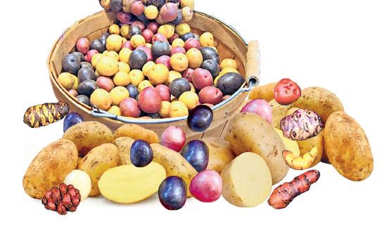 బంగాళాదుంప | ఆలూ | Potato | బంగాళాదుంప | ఆలూ | Potato |  Mohanpublications | Granthanidhi | Bhaktipustakalu Mohanpublications | Granthanidhi | Bhaktipustakalu