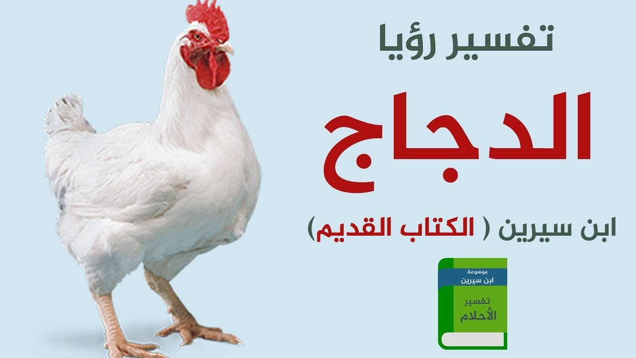 الدجاج في المنام الدجاج في الحلم تفسير رؤية الدجاج في المنام حلم الدجاج لابن سيرين الدجاجة