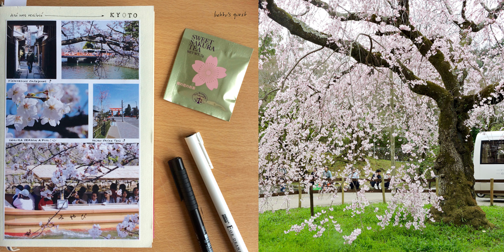 Sakura season in Kyoto Japan Travel journal by betitusquest