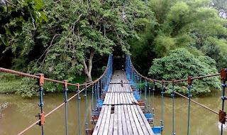 Rimba Punti Kayu di Palembang