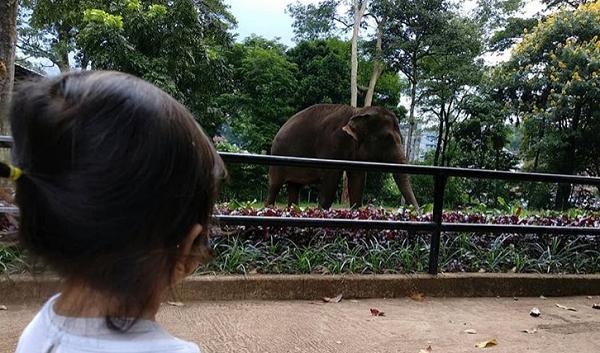 Wisata keluarga dan anak di Bandung Kebun Binatang