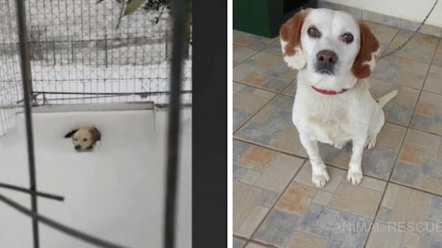 Σώθηκε σκυλάκι στην Λήμνο που το είχαν αφήσει δεμένο μέσα στο χιόνι (video)