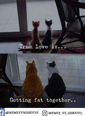 True love is getting fat together