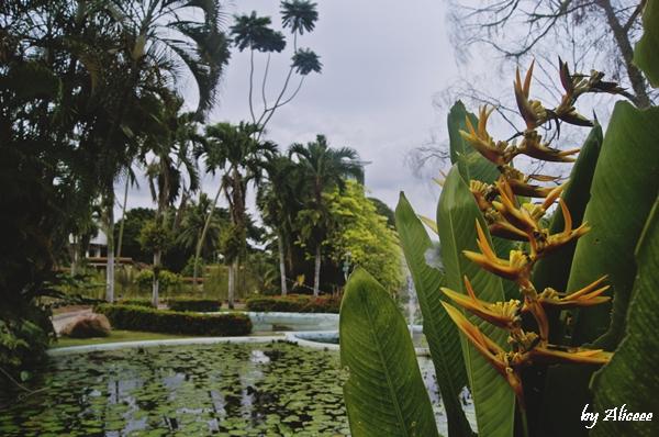 gradina-cu-orhidee