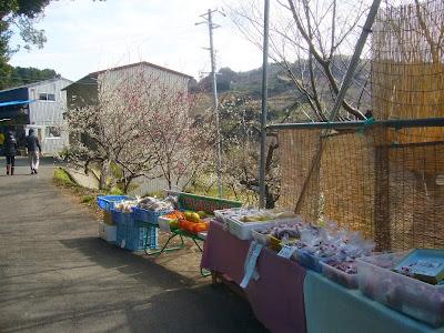 【和歌山県】日本一の梅の里・南部(みなべ)梅林 お土産屋