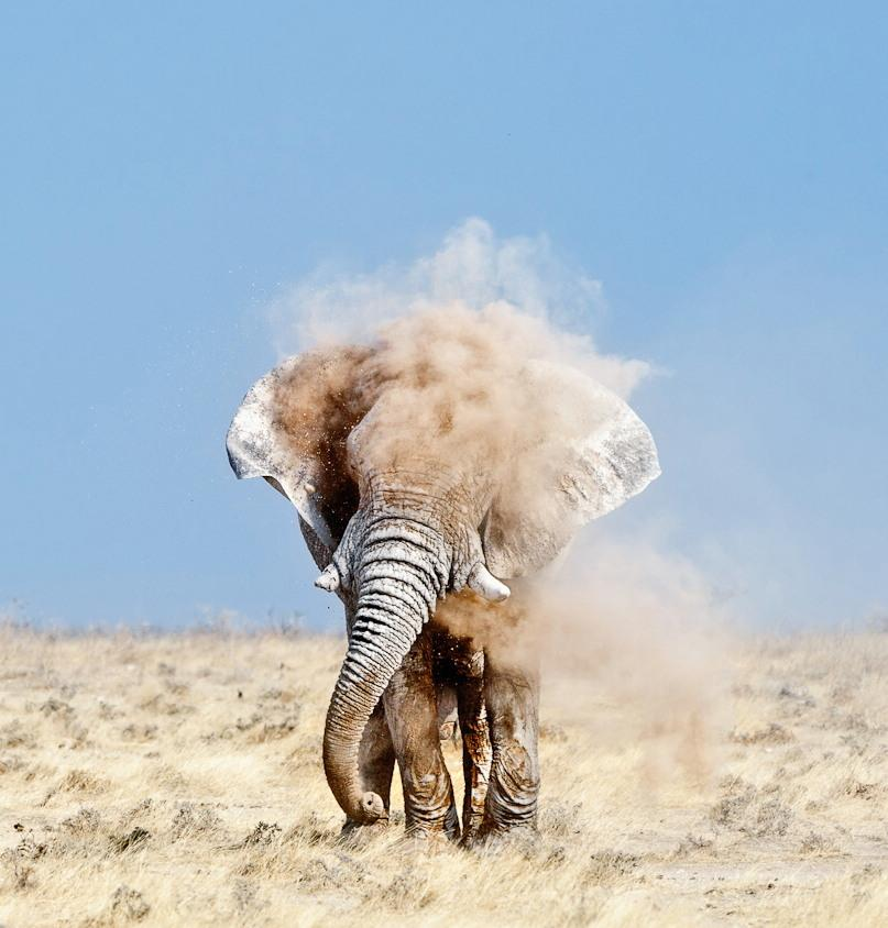BEAUTY OF WILDLIFE: Rare Snaps OF World Giant Animal Elephent