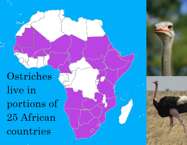 Where Do Ostriches Live In Africa?
