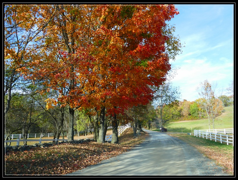 Autumn road in Chatham NY