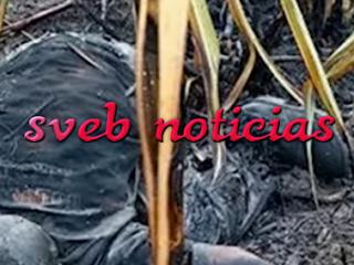 Hallan cadáver putrefacto en Carlos A. Carrillo Veracruz