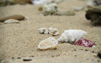 Wallpaper: Nature Beach, sand, shells