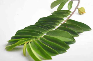 good and High Nutritious Soursop Leaf