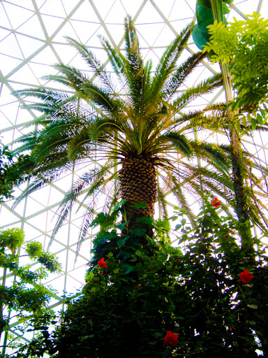 Mitchell Park Domes