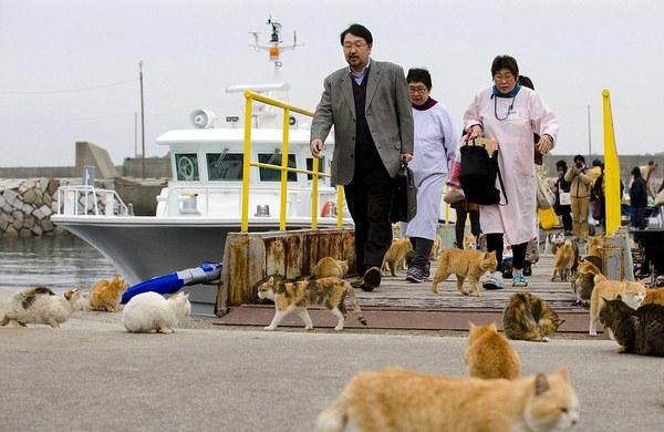 aoshima japan cats