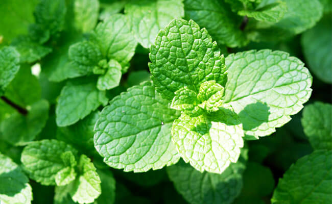 get rid of dark circles mint