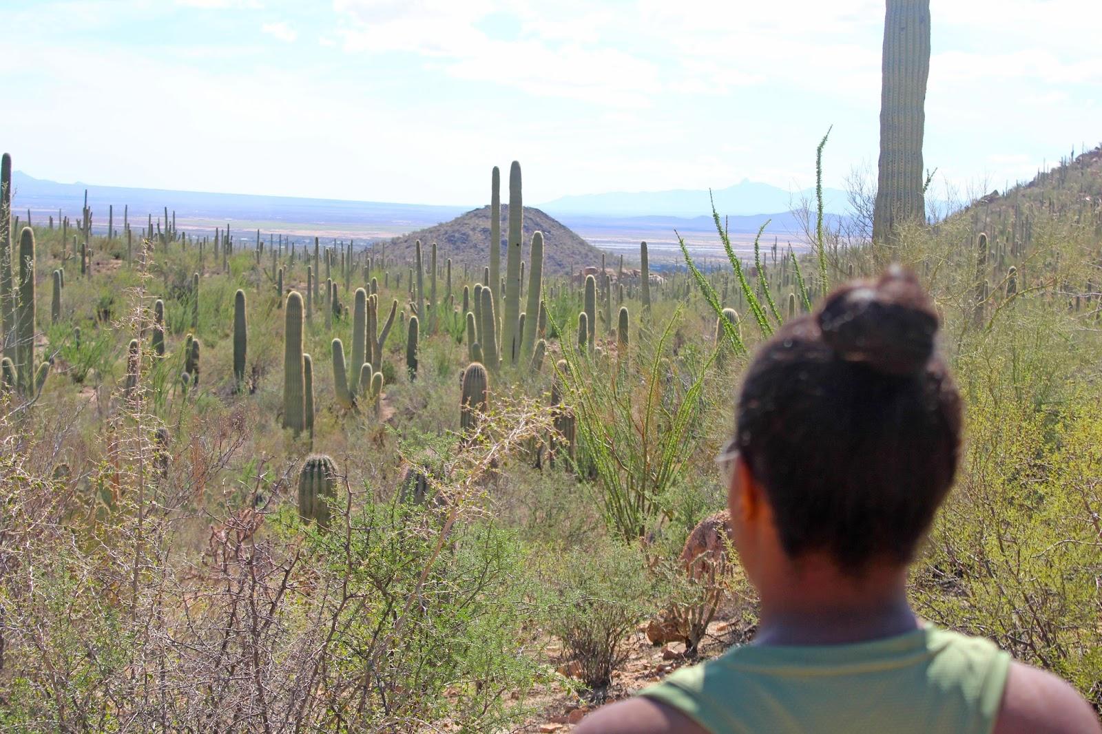 saguaro national park day trip 8