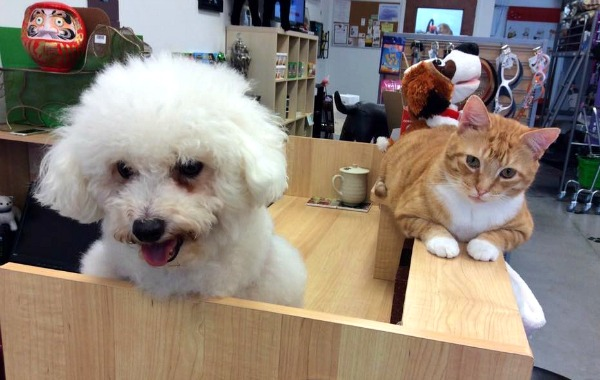 cat and dog pet supply druid hills