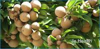 6 Benefits Manikara Fruith