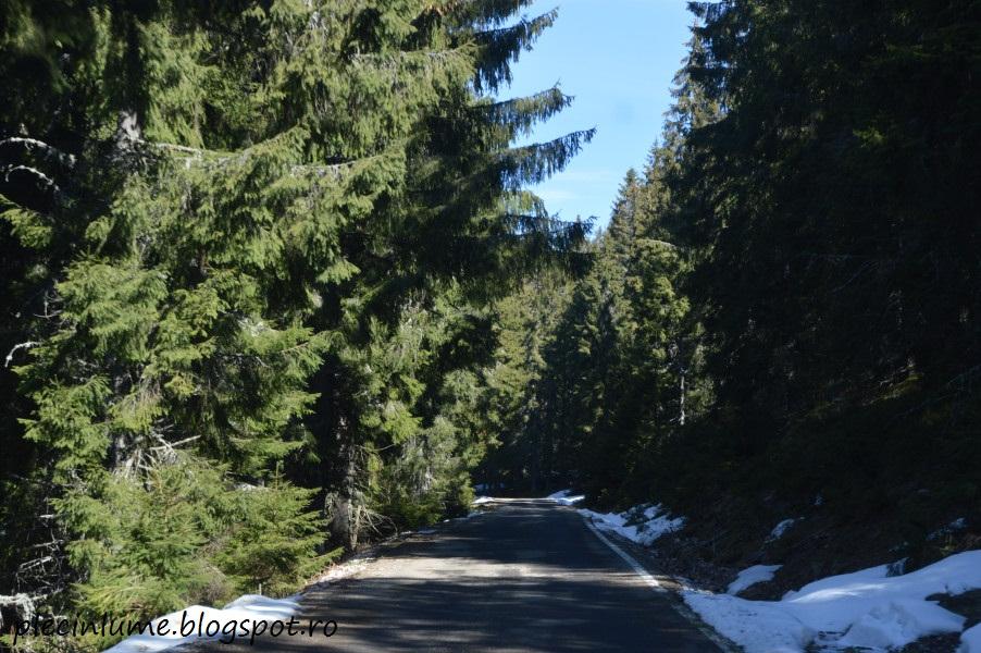 Drum prin Apuseni - de la Albac la Belis