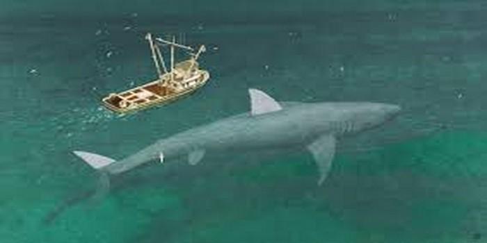 foto hiu megalodon di indonesia