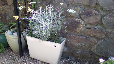 Recycled toilet cistern plant container Green Fingered Blog
