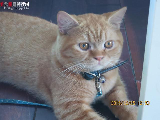 [南部] 高雄市鳳山區【那個家HE LE HOME】治癒系的寵物餐廳