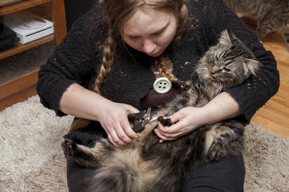 Nainen pitää kissaa sylissä ja leikkaa sen kynsiä
