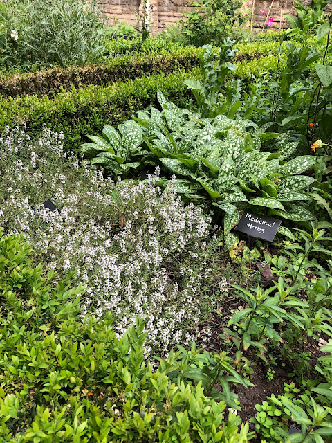 Southwark Cathedral Herb garden , Box, Thyme, Lungwort