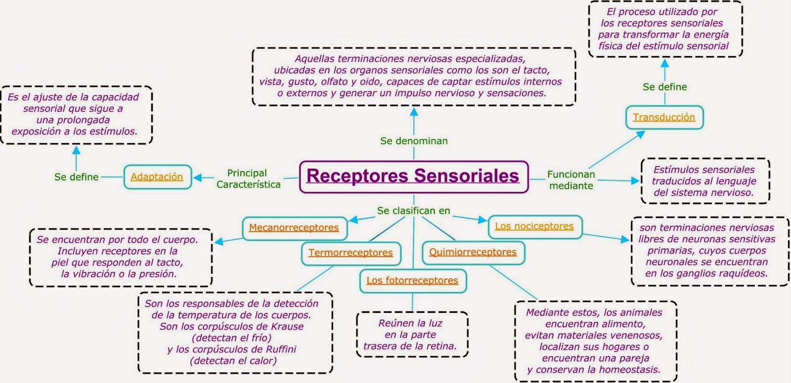 biologia2bachcamp: 3º ESO. TEMA 11. ÓRGANOS DE LOS SENTIDOS