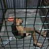 Kasihan, Pria Tua Ini Dikerangkeng Anaknya Dalam Ruangan Mirip Penjara Karena Stroke