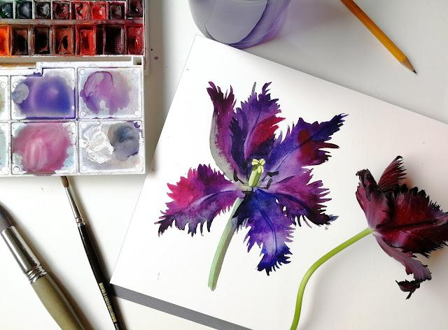 Black Parrot tulip, flower, botanical, nature, watercolor, Olga Begak, artist, illustration