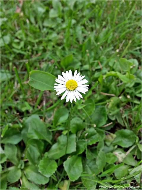 Kwiatek z żółtym środkiem i białymi płatkami