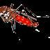मच्छर चालीसा Machar Chalisa